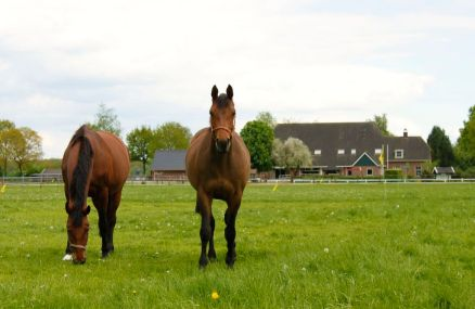 boerhaarshoeve-paarden2